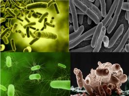 Anti lumut ( Microorganisme control )
